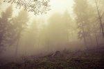 las - Bieszczady