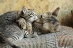 Produkty dla właścicieli kotów, jakie będzie okazja nabyć bez trudności w Internecie.