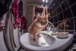 Kuwety oraz karmy dla kota – przedmioty, o których trzeba pamiętać chcąc mieć w swoim domu kota.